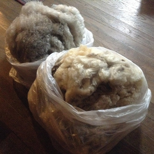 Give Fleece a Chance: From Raw Fiber to Wool -  ()
