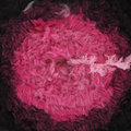 Trendsetter Yarns Willow - Pink Shades (07)